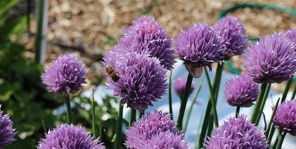Problem_-Help-the-bees1.jpg