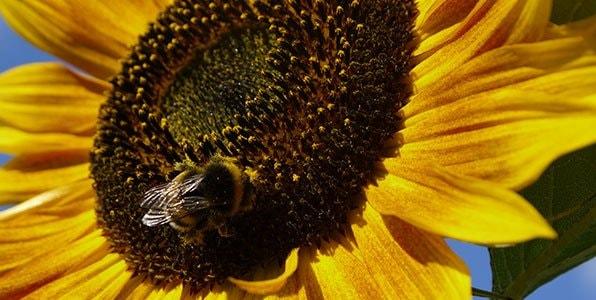 Problem_-Help-the-bees4.jpg