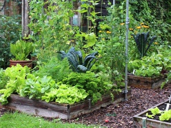 Garden-pests3.jpg