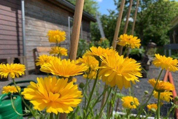 Garden-pests4.jpg