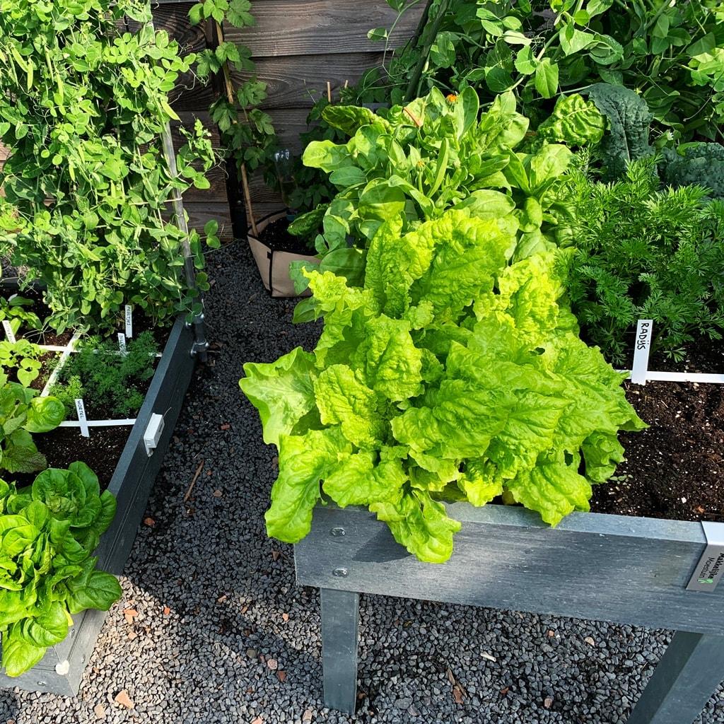 garden-in-full.jpg