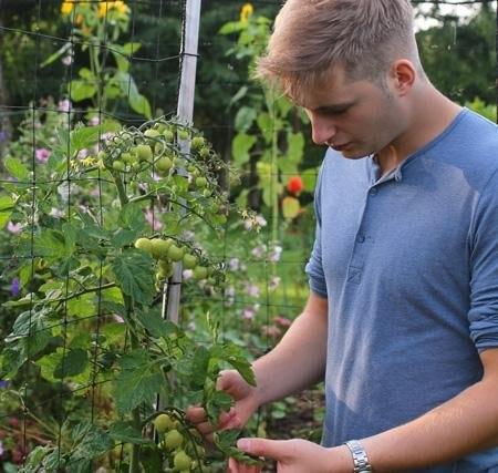 hoi-ikbenJelle-Jelle Medema in his garden tending to the tomatoes