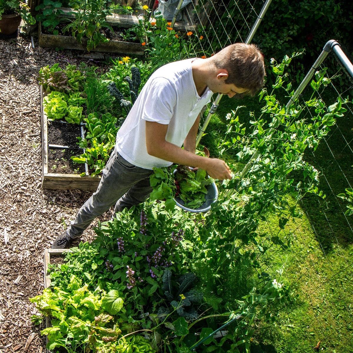 FAQs-for-beginning-gardeners7.jpg