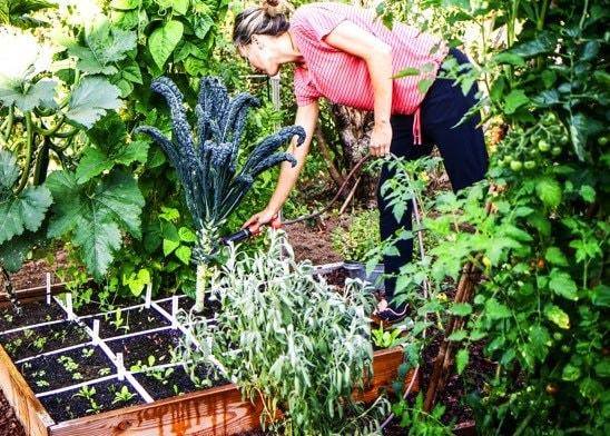 the-Planty-Gardening-Mission4.jpg