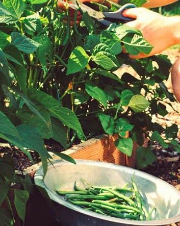 the-Planty-Gardening-Mission2.jpg