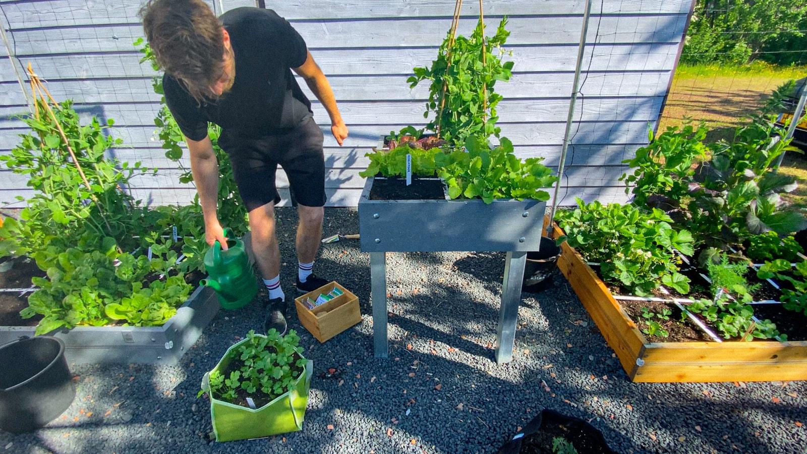 July-in-the-Planty-Garden4.jpg