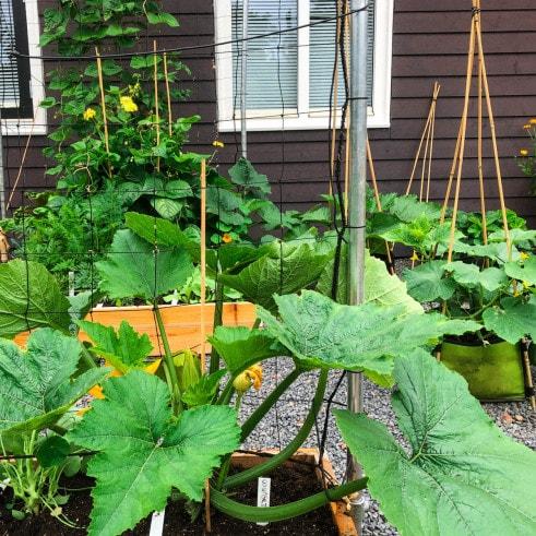July-summer-vegetables.jpeg