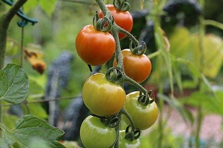 July-mega-harvest-9.jpg
