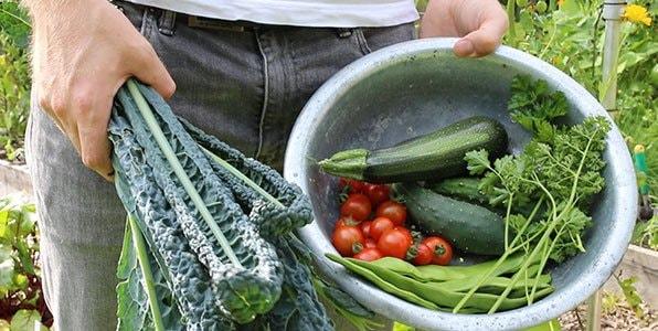 July-mega-harvest-2.jpg