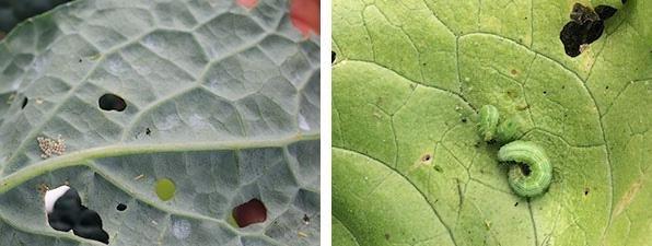 caterpillars8.jpg