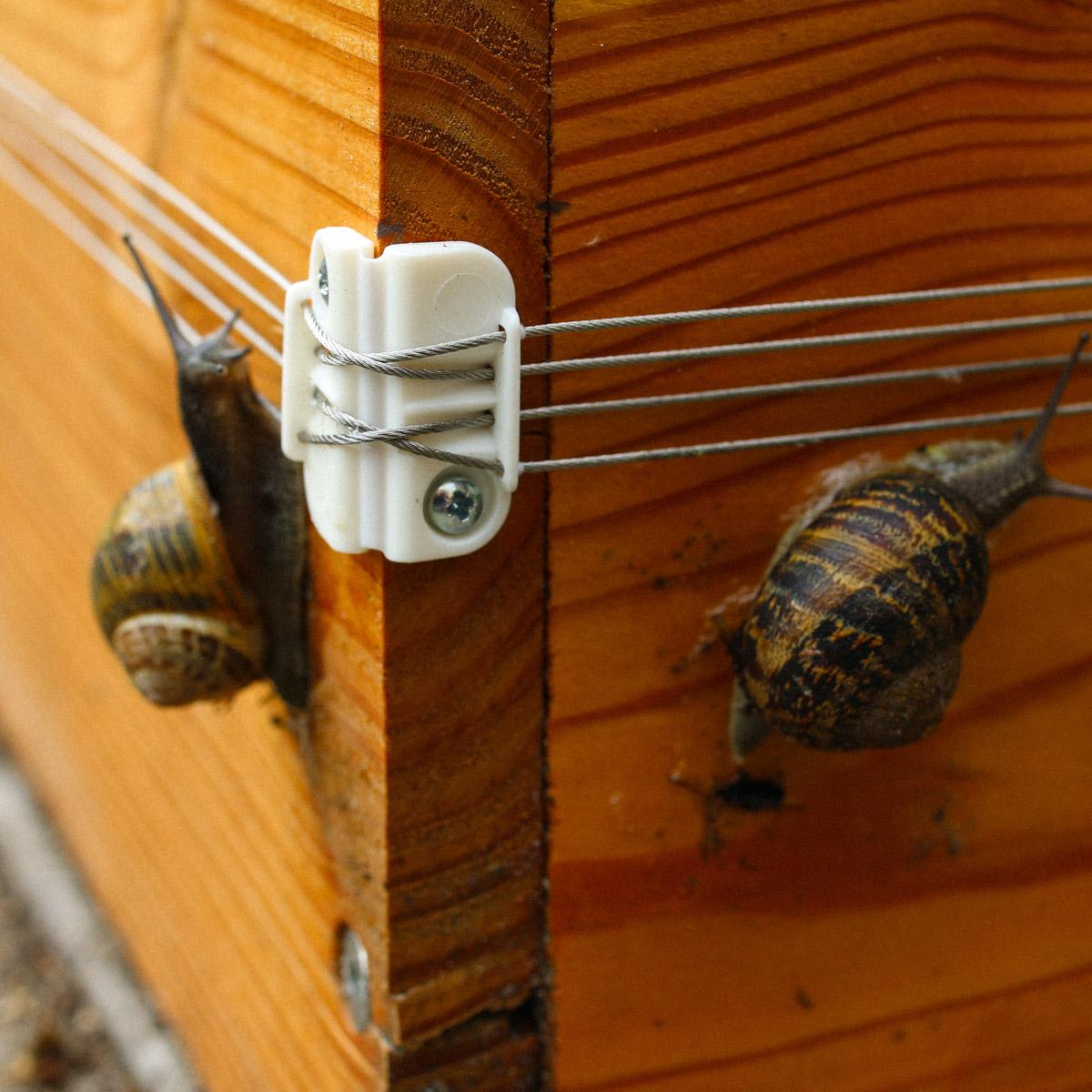 two-slugs-on-the-slug-fence.jpeg