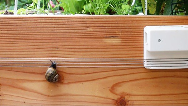A-barrier-for-slugs-and-snails1.jpg
