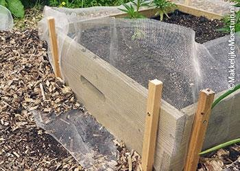 A-barrier-for-slugs-and-snails12.jpg