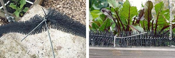 A-barrier-for-slugs-and-snails8.jpg
