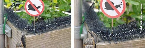 A-barrier-for-slugs-and-snails14.jpg