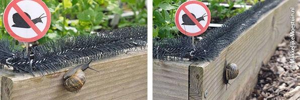 A-barrier-for-slugs-and-snails15.jpg