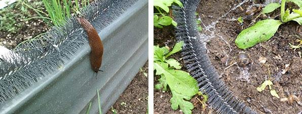A-barrier-for-slugs-and-snails13.jpg