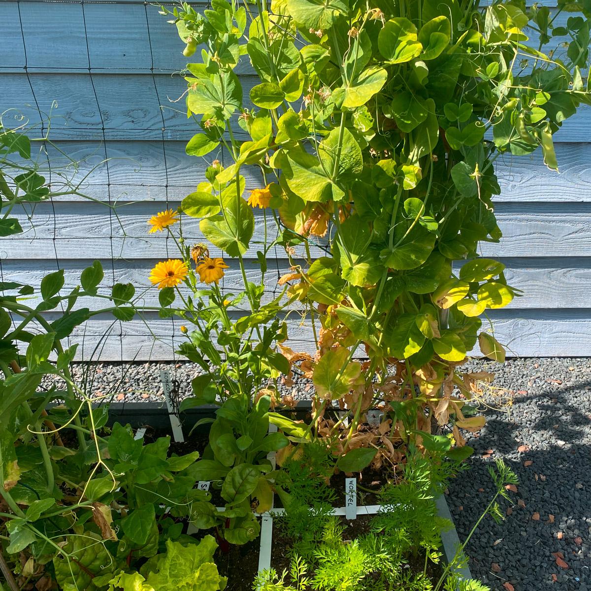 why-plants-yellow7.jpg