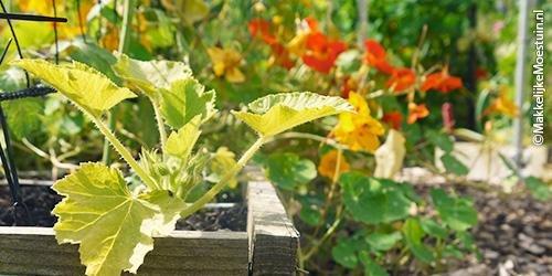 why-plants-yellow1.jpg