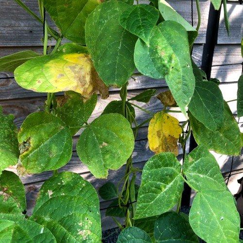 why-plants-yellow6.jpg