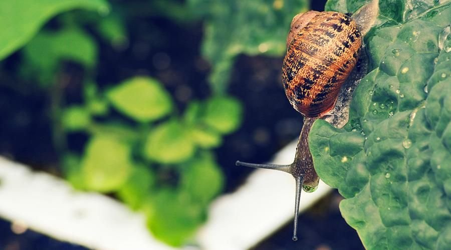 help.-slugs-and-snails2.jpg