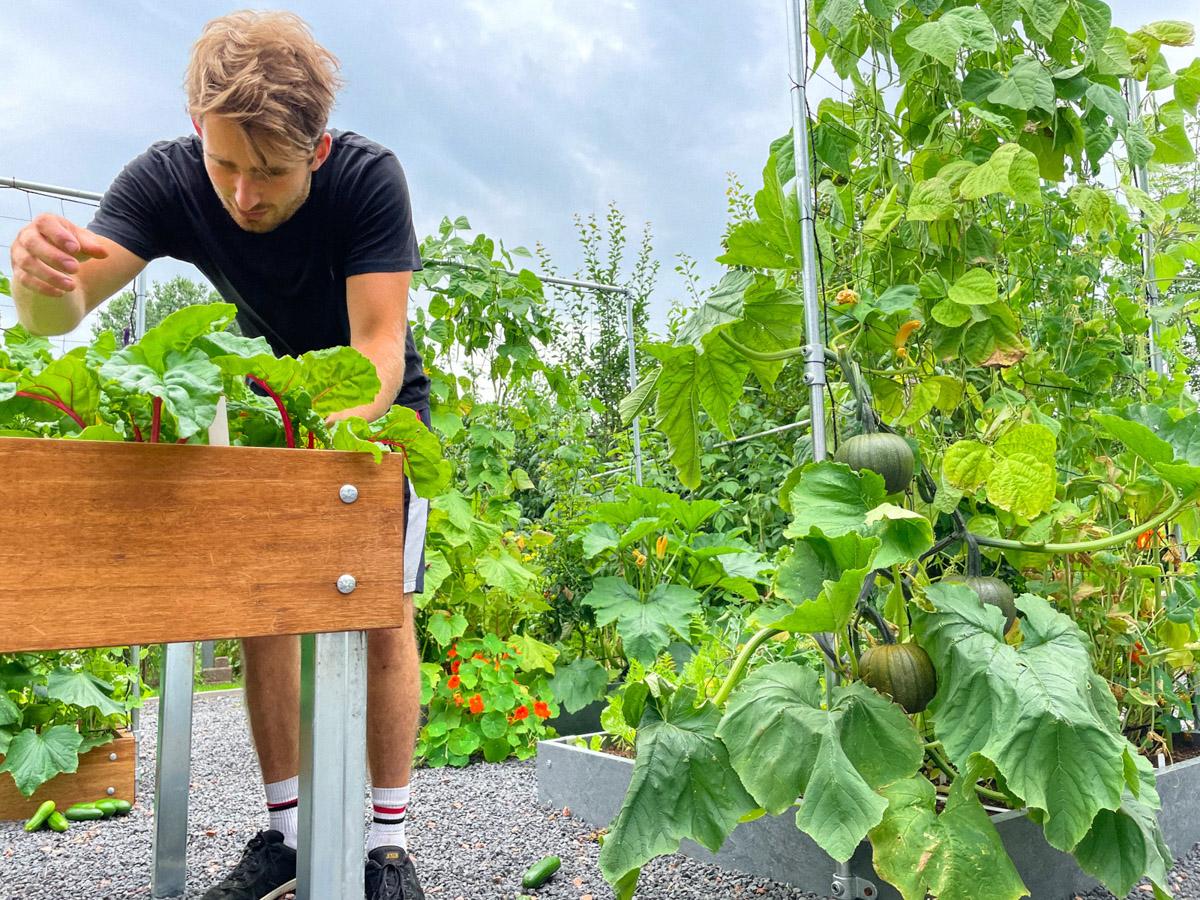 blog-early-august-in-the-vegetable-garden1.jpg