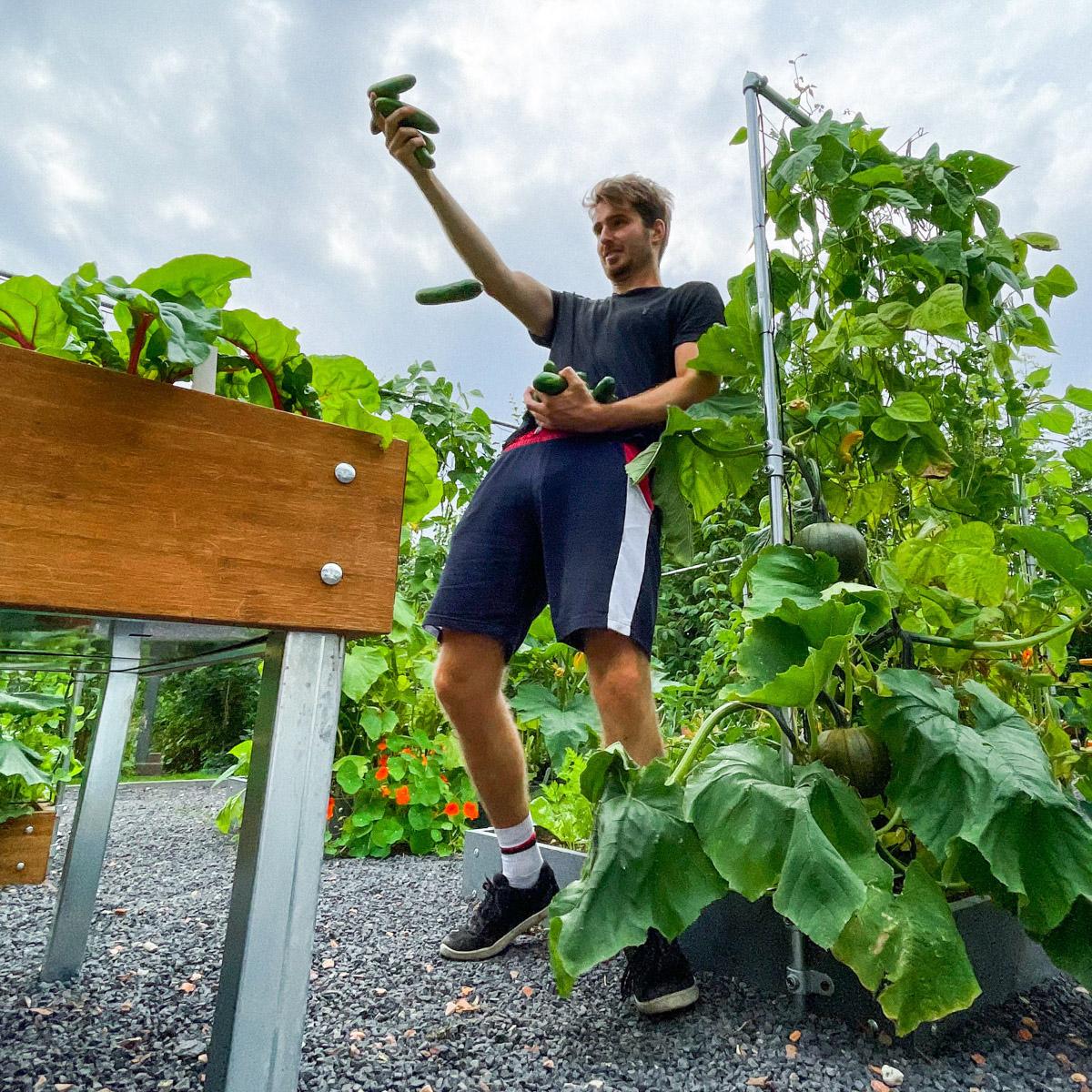blog-early-august-in-the-vegetable-garden2.jpg