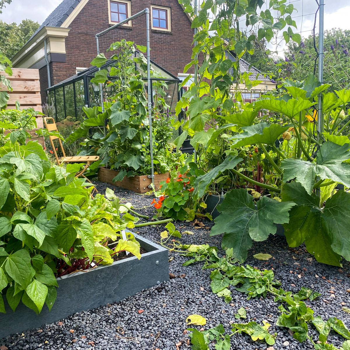blog-early-august-in-the-vegetable-garden3.jpg