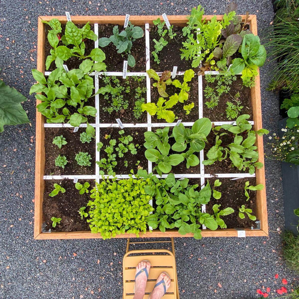 blog-early-august-in-the-vegetable-garden8.jpg