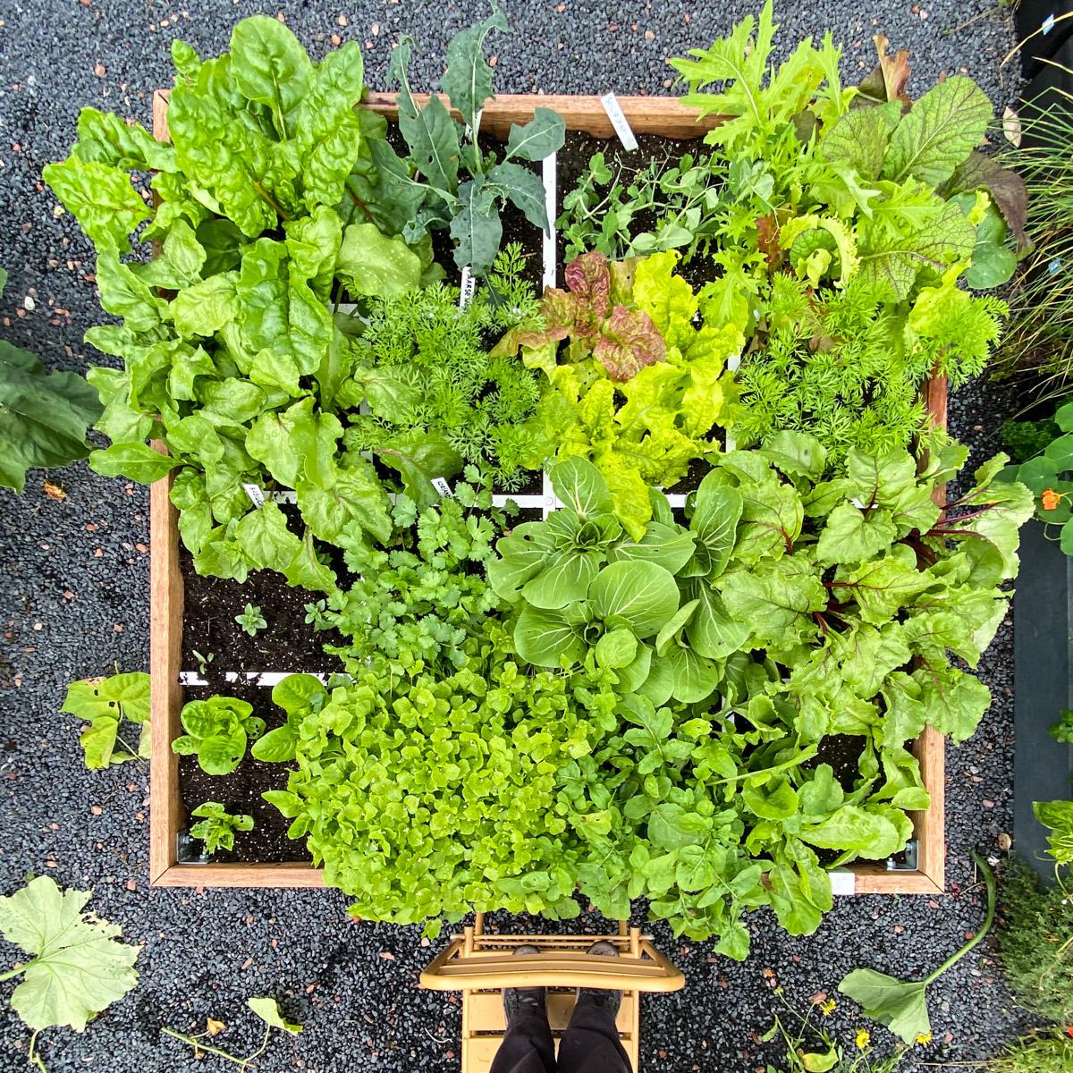 blog-early-august-in-the-vegetable-garden9.jpg