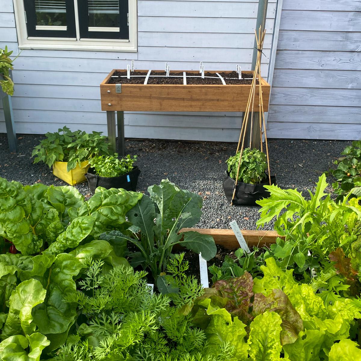 blog-early-august-in-the-vegetable-garden6.jpg