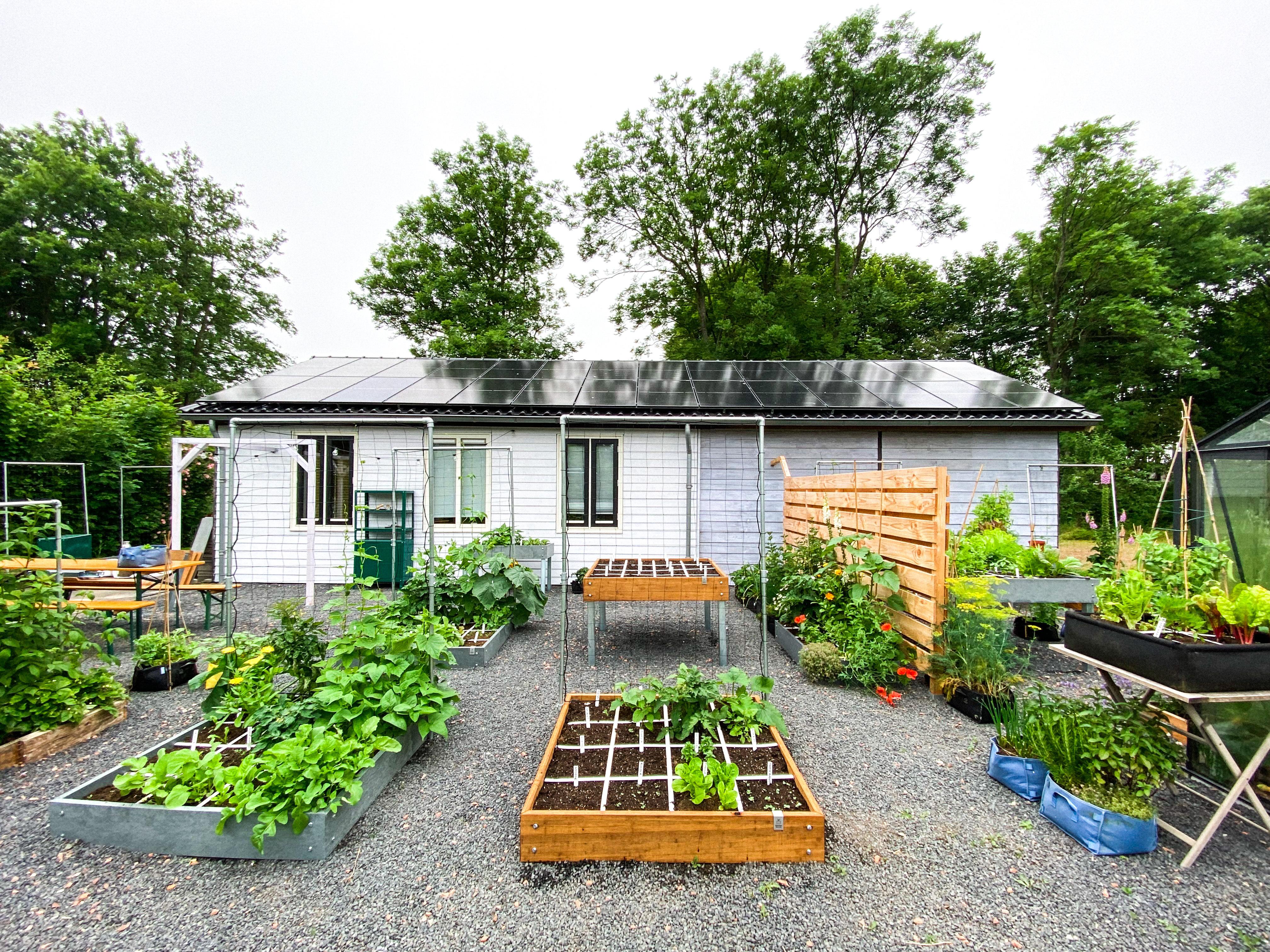 blog-july:-summer-in-the-veg-garden5.jpg