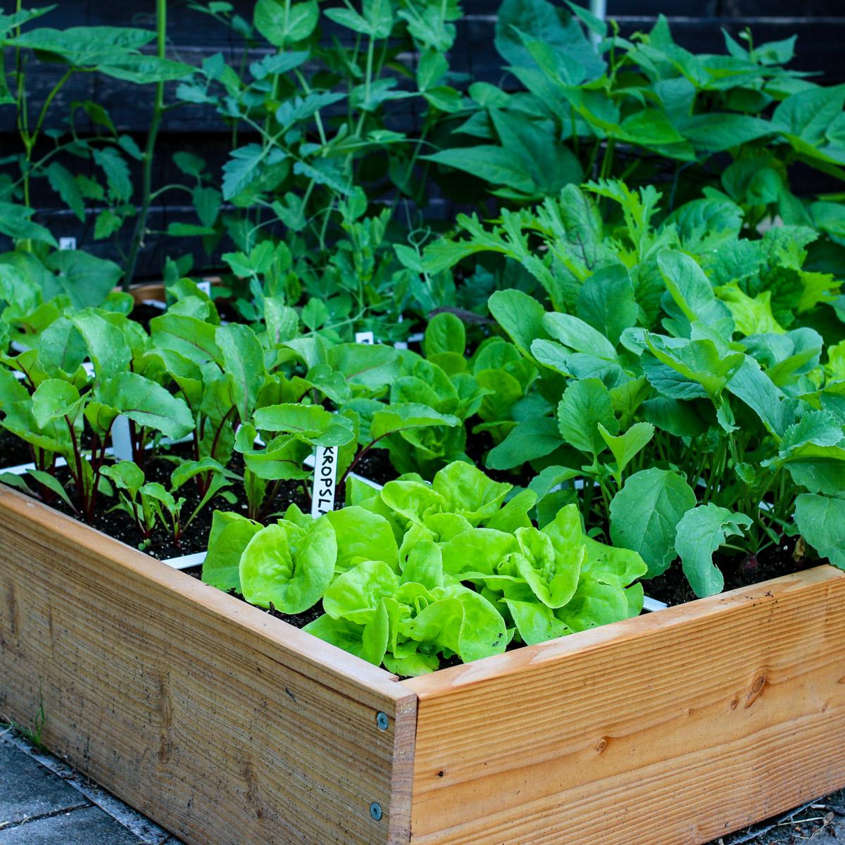 blog-july:-summer-in-the-veg-garden13.jpg