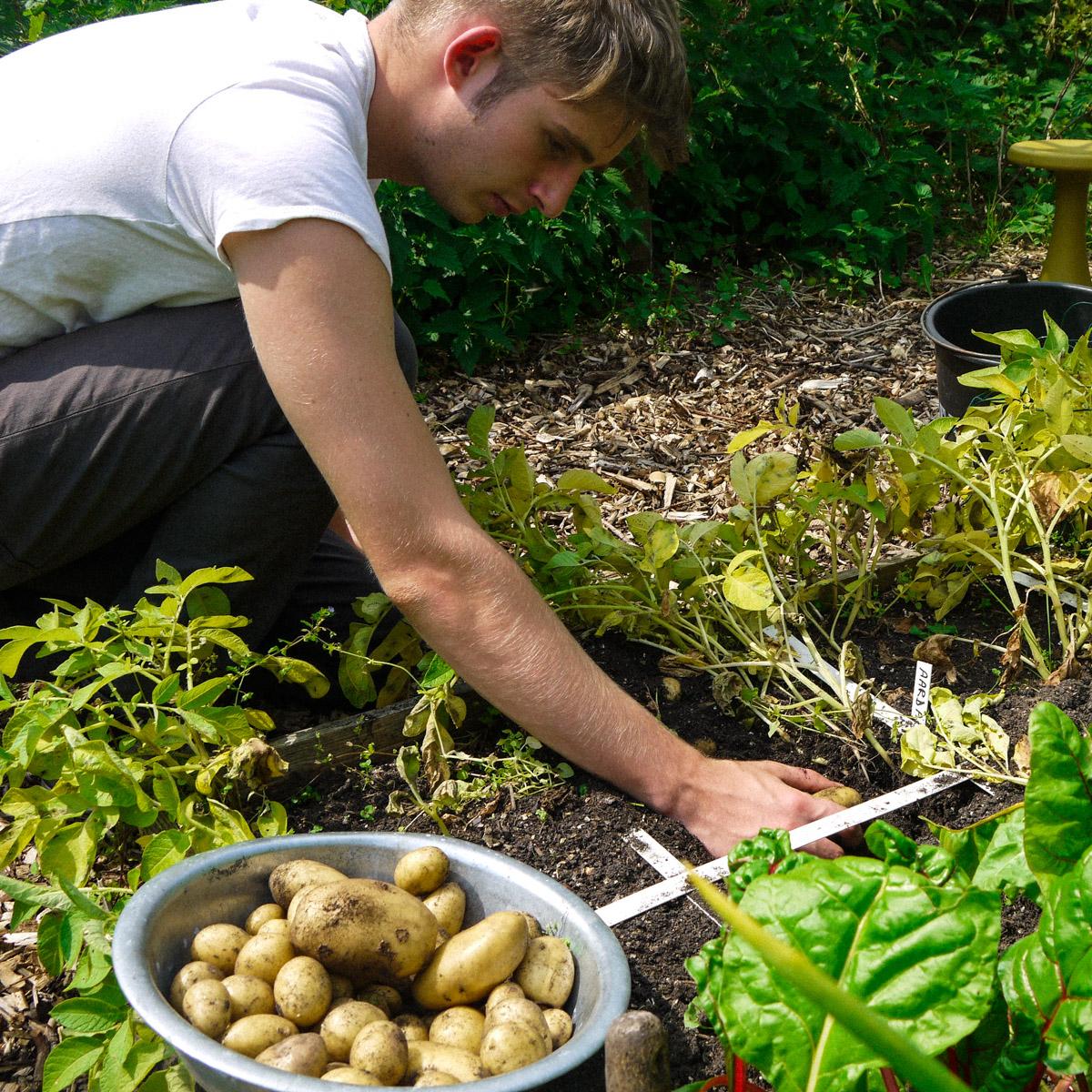 blog-july:-summer-in-the-veg-garden8.jpg