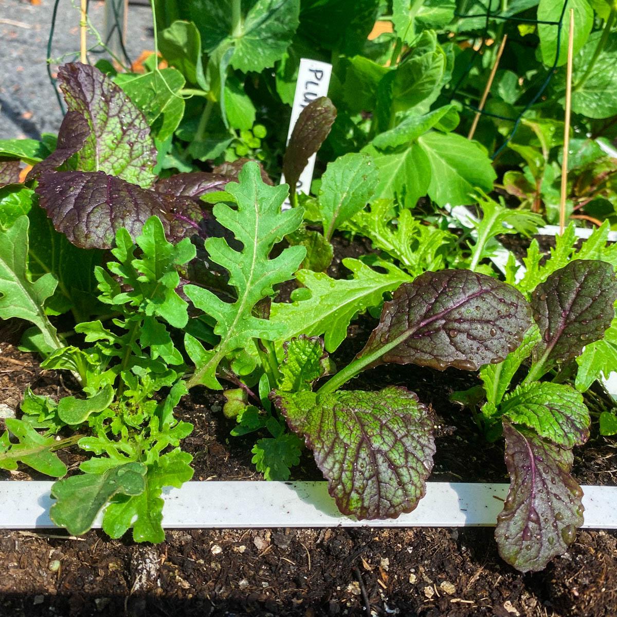 blog-july:-summer-in-the-veg-garden14.jpg
