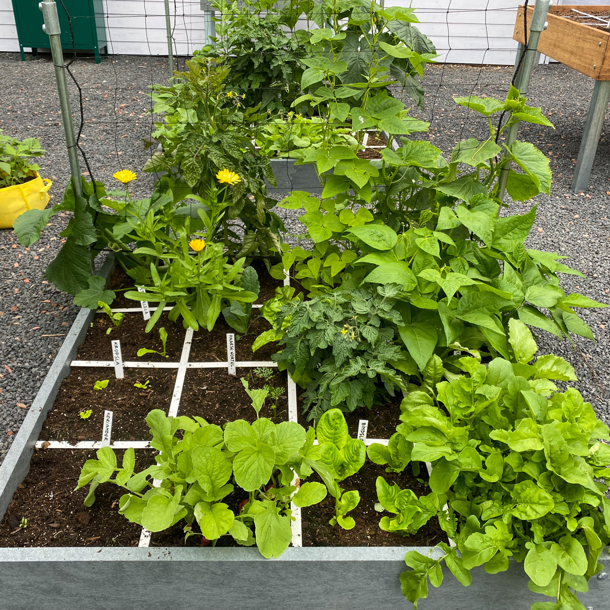 blog-july:-summer-in-the-veg-garden10.jpg