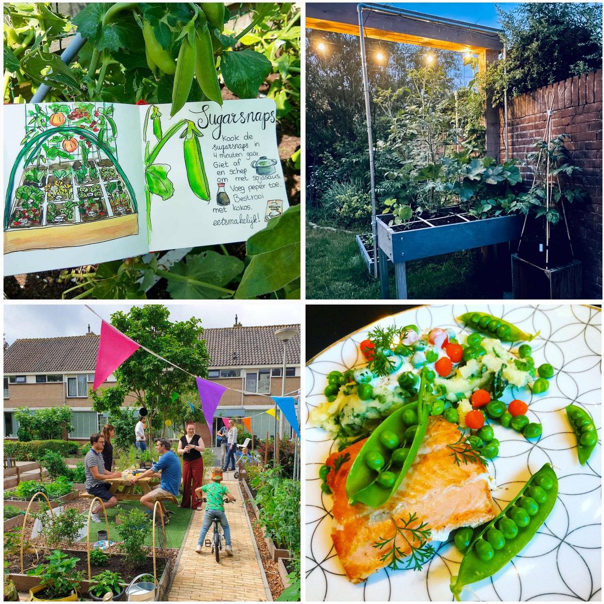 blog-july:-summer-in-the-veg-garden2.jpg