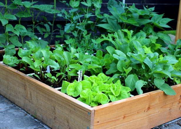 blog-June-perfect-garden1.jpg