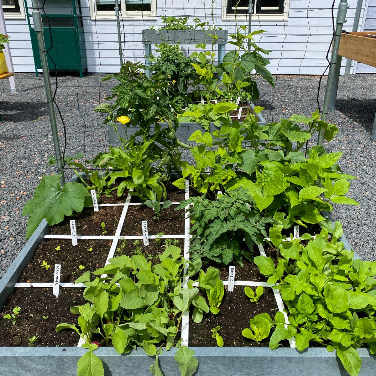 blog-June-perfect-garden5.jpg