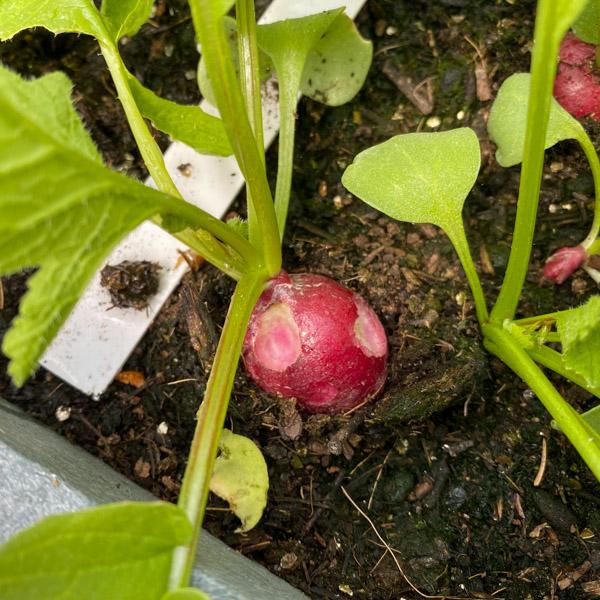 blog-June-perfect-garden8.jpg
