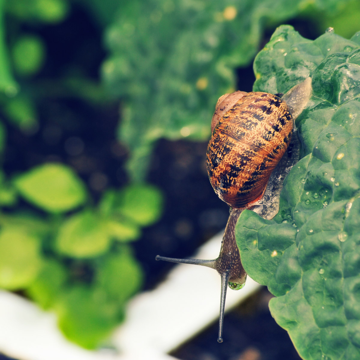 blog-June-perfect-garden11.jpg