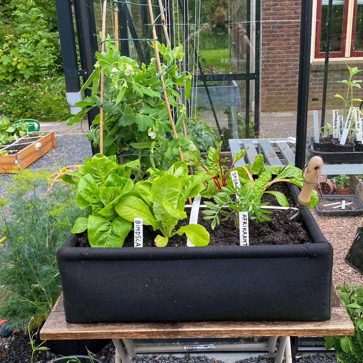 blog-bring-on-the-summer-garden6.jpg