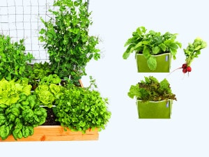 <div>Everything you need to grow your own vegetables.</div>