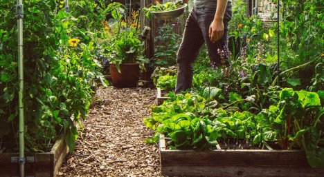 old-image-jelle-vegetable-garden.jpeg