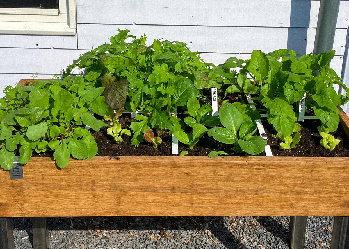 blog-1-sept-2021-tour-of-the-planty-garden18.jpg