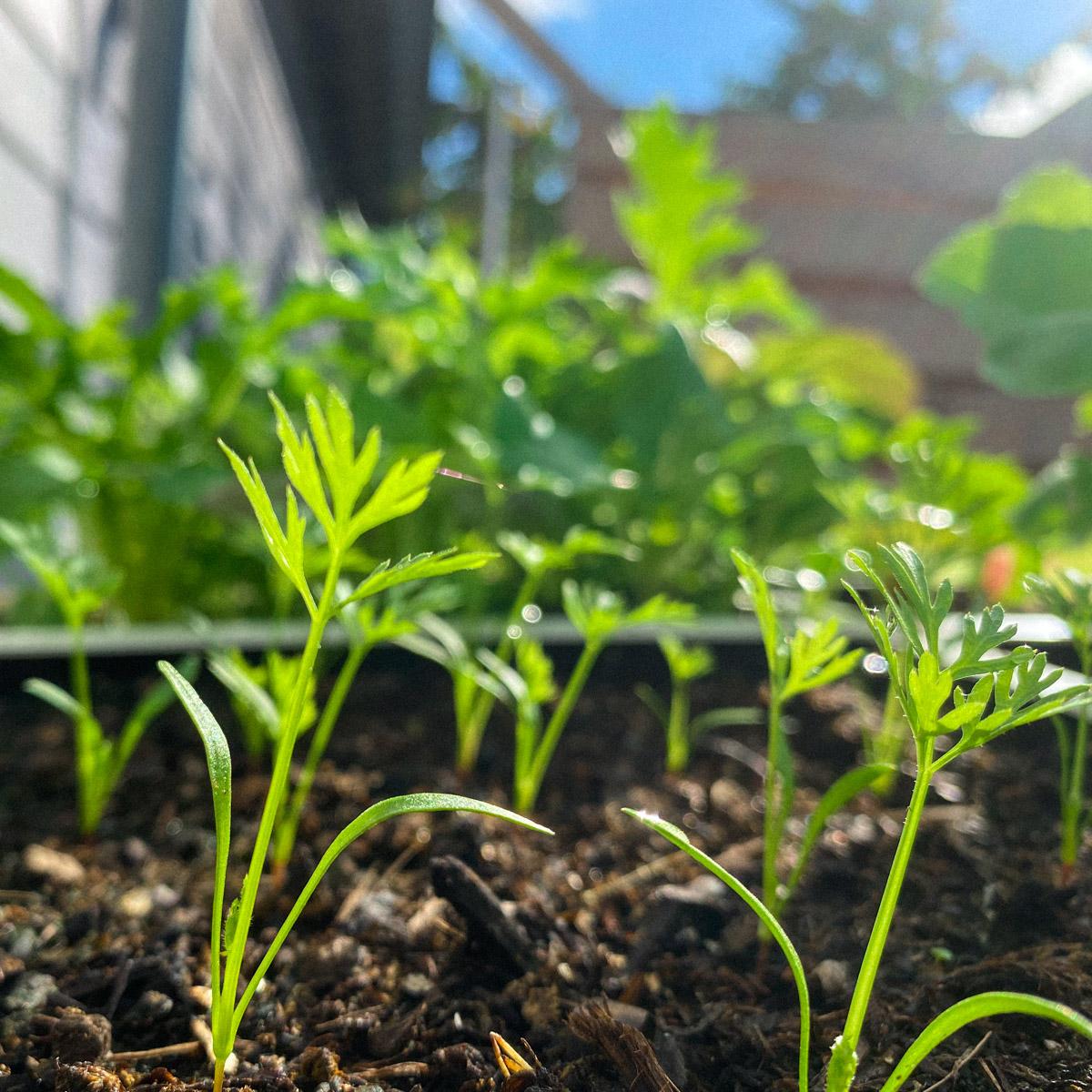 blog-1-sept-2021-tour-of-the-planty-garden22.jpg