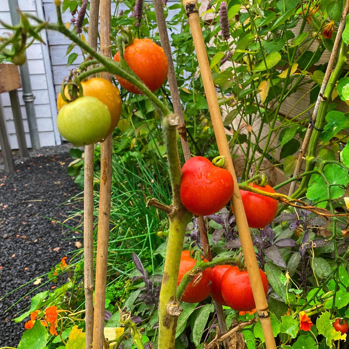 blog-1-sept-2021-tour-of-the-planty-garden14.jpg