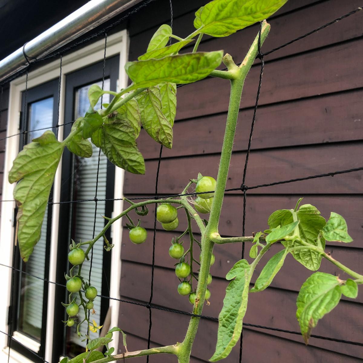 blog-1-sept-2021-tour-of-the-planty-garden25.jpg