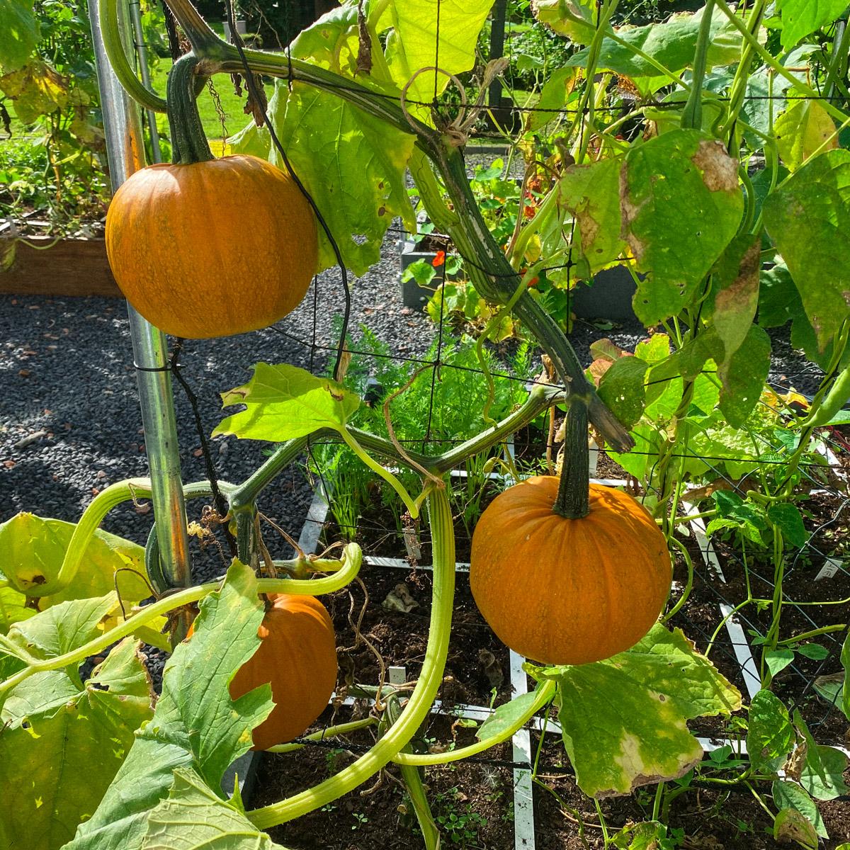 blog-1-sept-2021-tour-of-the-planty-garden16.jpg