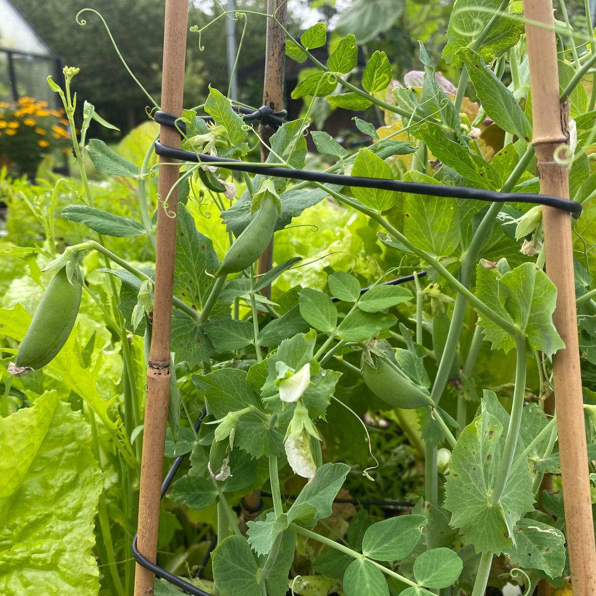 blog-1-sept-2021-tour-of-the-planty-garden19.jpg